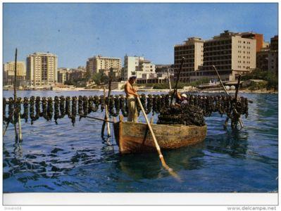 0012 Taranto-Mitilicoltura In Mar Piccolo