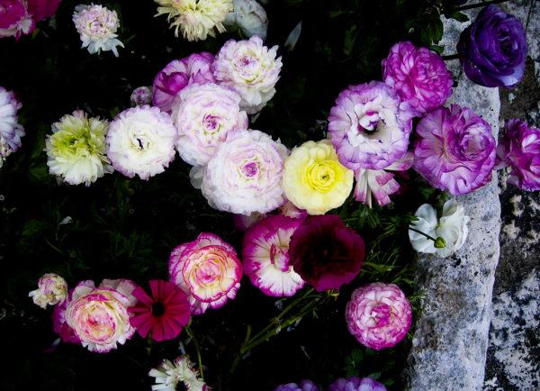 flowers of joy